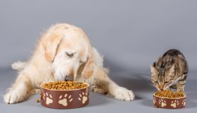 Close-Up Of Pets Eating Food Against Gray Background